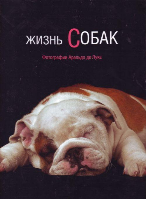 Жизнь собак.