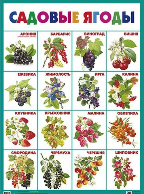 Sadovye jagody