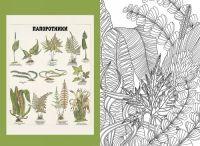Vdokhnovljajsja i risuj. Priroda