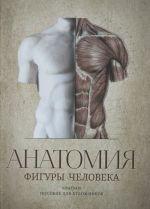 Anatomija figury cheloveka.