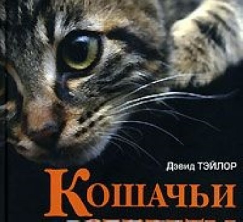 Кошачьи секреты