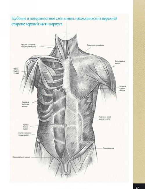 Школа художника. Анатомия