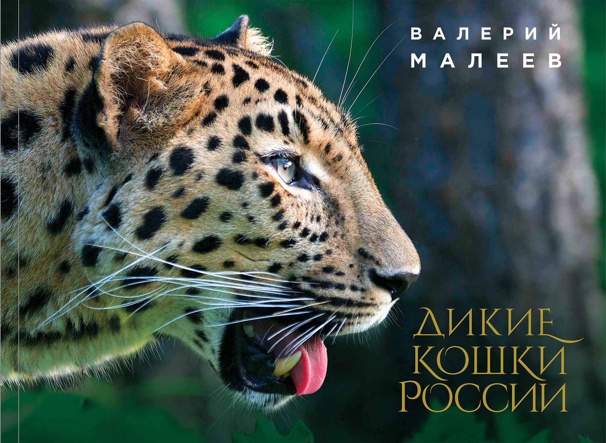 Dikie koshki Rossii: illjustrirovannyj avtorskij fotoalbom