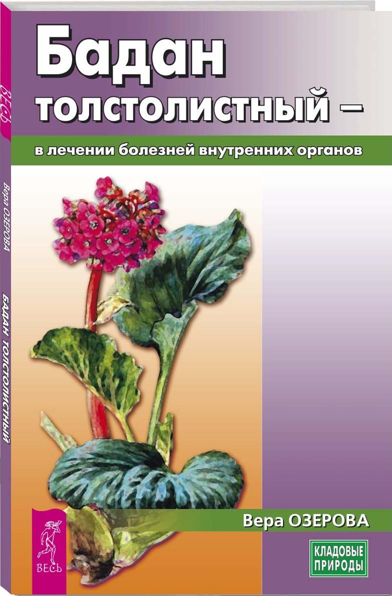 Бадан толстолистный - в лечении болезней внутренних органов
