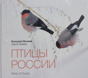 Ptitsy Rossii