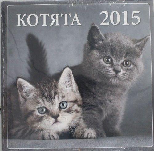 Котята 2015