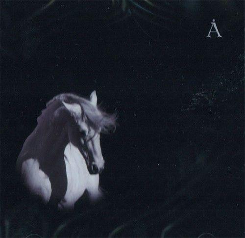 Аквариум. Лошадь белая