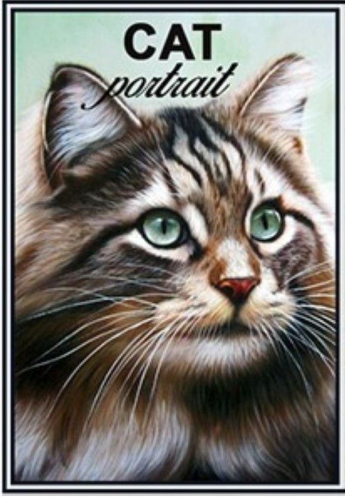 Matches. Norwegian Forest Cat Cat portrait