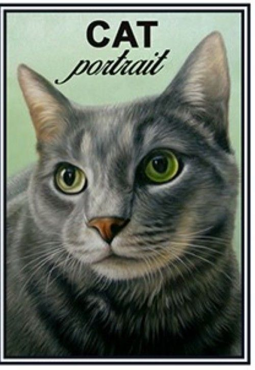 Matches. European shorthair cat - Cat portrait