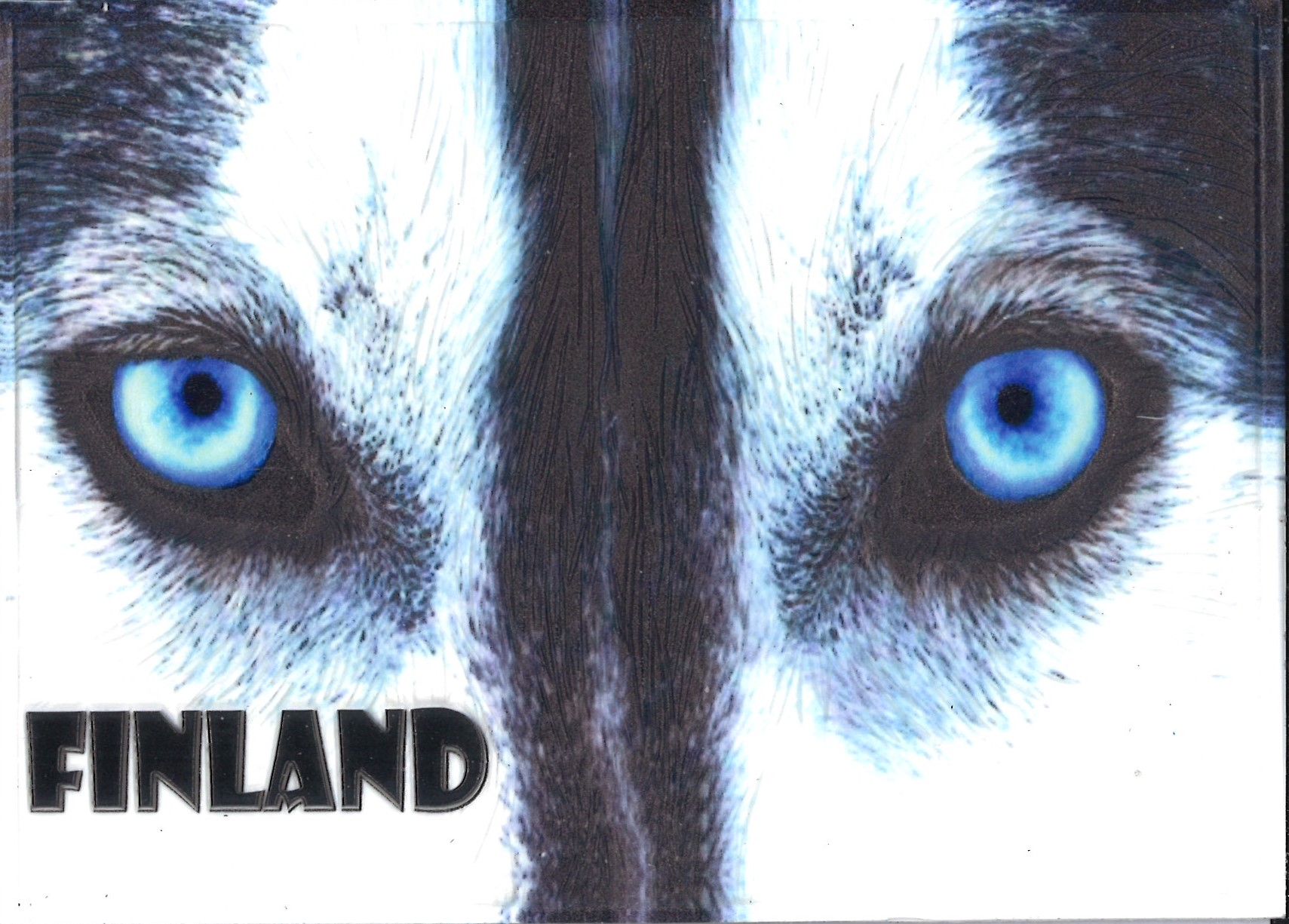 Embossed postcard - Finland Husky